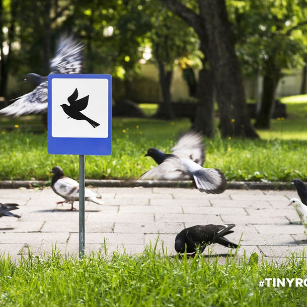 tinyroadsign-road-signs-for-animals1__880