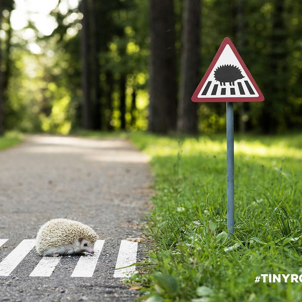 tinyroadsign-road-signs-for-animals__880