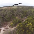 Battle in the Sky. Eagle vs. Drone: Who Do You Think Wins?