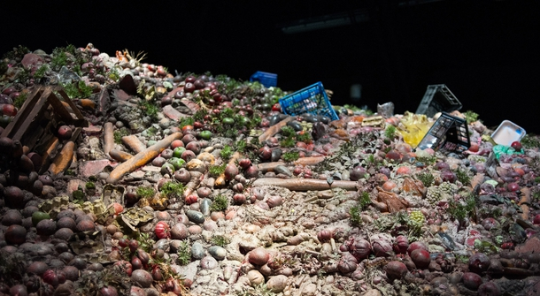 Fifth of world's food lost to over-eating and waste, study finds
