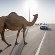 Desert racing: tires vs. tracks