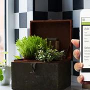 web-summit-horticool-app-garden-add-plants-kitchen-herbs