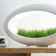 Grasslamp: Bring nature to your desk