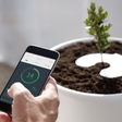 Now you can grow a tree from a loved one