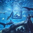 Sleeping with the sharks