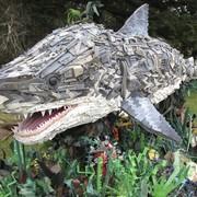 shark__880