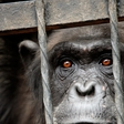 After 140 years animals will be free