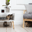 Now technology remotely treats and cares for your pets