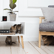 petcube_paly_cats_interior