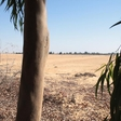 A forestry project in Egypt shows great potential in fighting desertification
