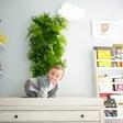 Freshen up your room with a smart vertical indoor garden