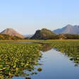 Save Skadar Lake, one of Europe's last true wildernesses, from devastating construction