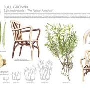 full-grown-ltd-5