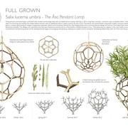 full-grown-ltd-6