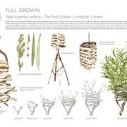 full-grown-ltd-7