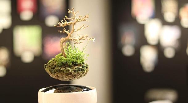 Value Earth through Art with Air Bonsai