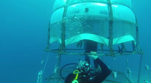 How does your underwater garden grow?