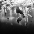 Magnificent winners of the 2015 National Geographic Traveler Photo Contest
