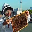 "Erika Mayr, the bee whisperer: ""Urban honey comes with a very special aroma and flavor"""