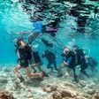 Eco-tourists of the world, travel to the three Gilis and help preserve the coral reefs!