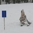 Ski robot in action
