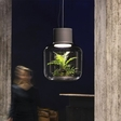 Mygdal: Magical Plant Lamp will Sustain Plant and Light Your Room