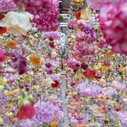 garten-pink-flowers-1020x610