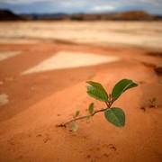 biljka-u-peruanskoj-amazoni-wwf_dado-galdieri