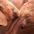 Latest findings show global wildlife populations could drop two-thirds by 2020
