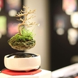 Value Earth through Art with Air Bonsai