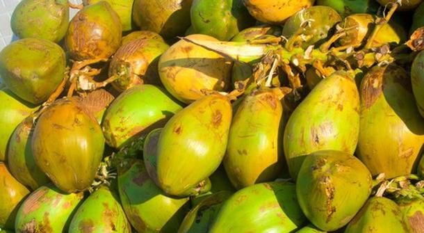 The coconut cream market growth