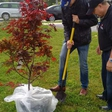 Special Tree Planting Puts Coleman University on the World Map